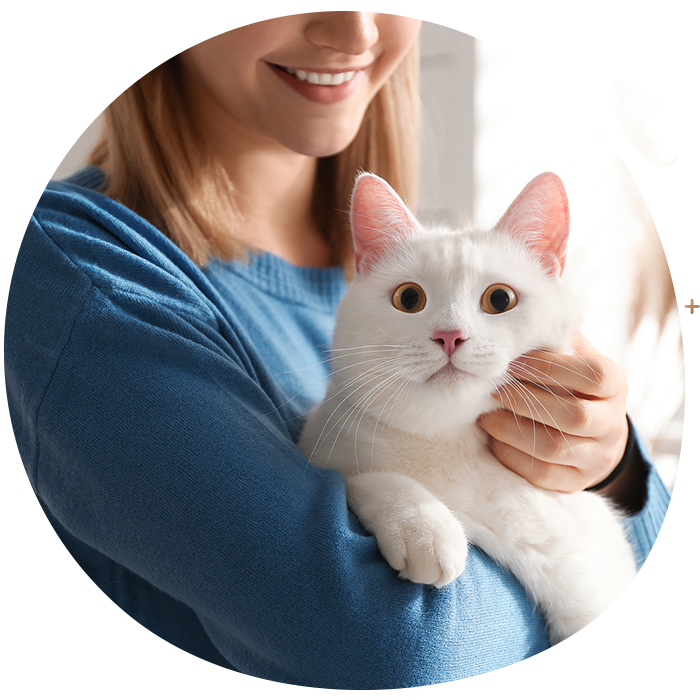 https://www.thecatclinic.sg/wp-content/uploads/SecondBanner.png