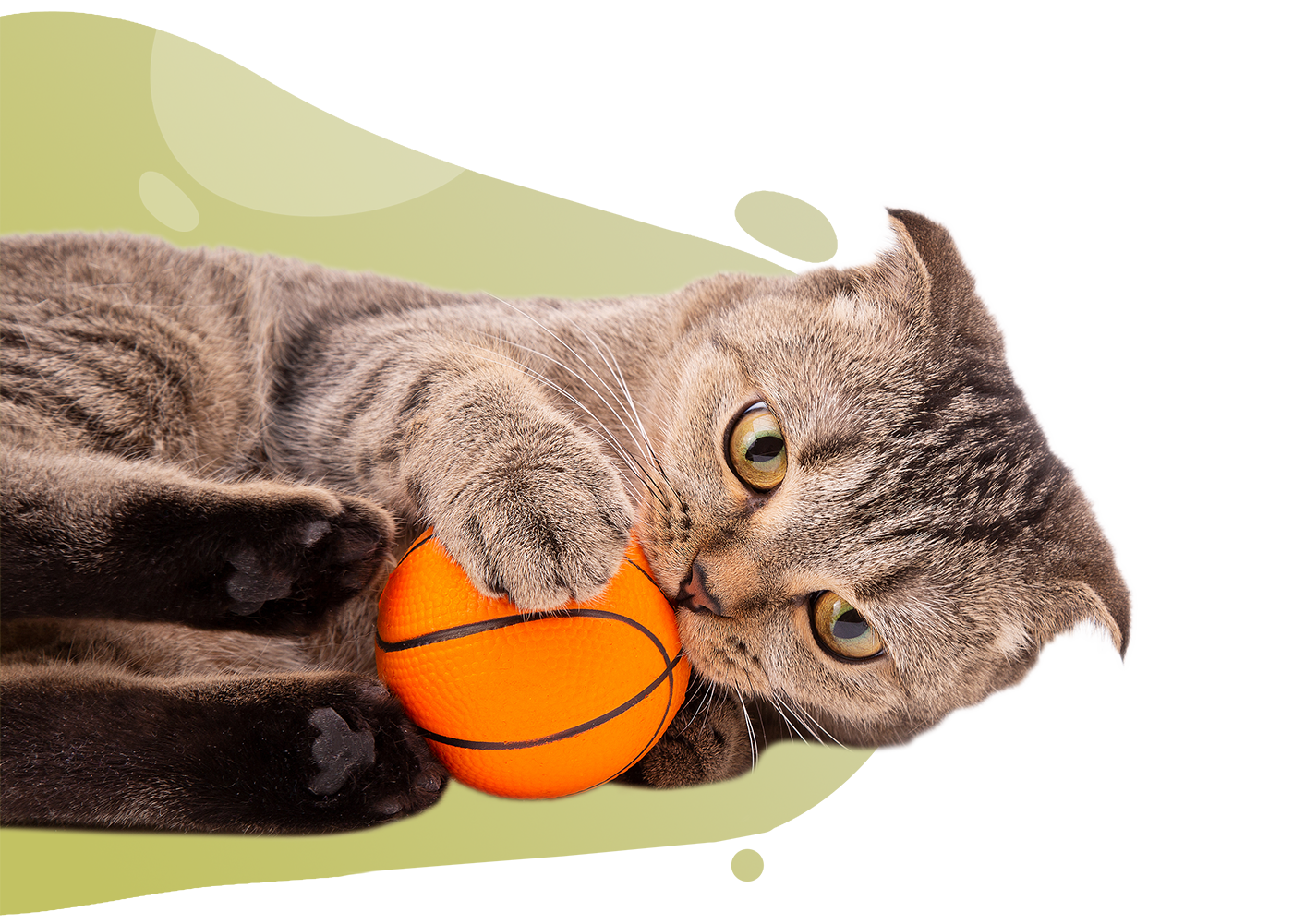 https://www.thecatclinic.sg/wp-content/uploads/bigstock-The-Cat-Plays-With-The-Ball-B-354032939.png